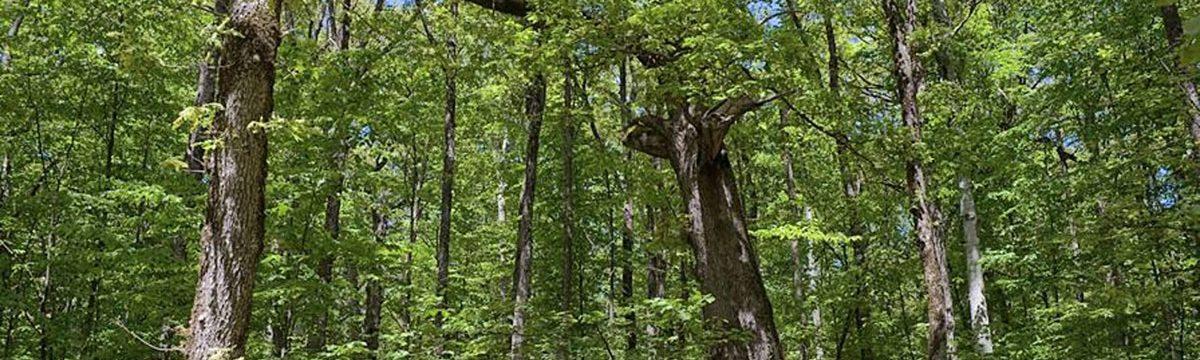 Silkosia Conservation Park